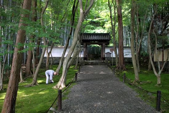 地蔵院(竹の寺)_e0048413_21924100.jpg