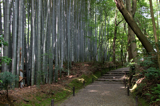 地蔵院(竹の寺)_e0048413_2194175.jpg