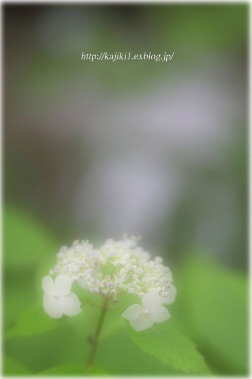 d0120622_2012473.jpg