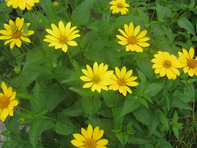 今年は早く咲きました!!_d0112533_911131.jpg