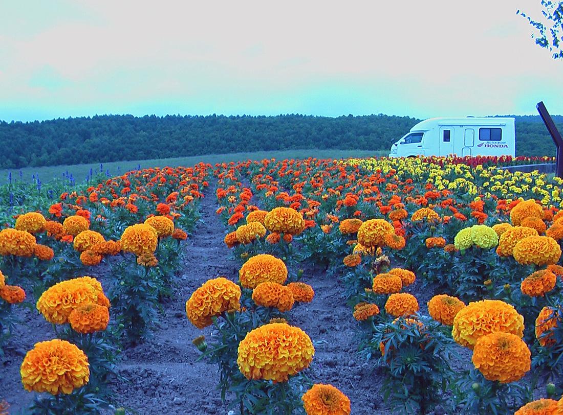 北海道 ・・・ ★ トランポの有る風景 ★_d0091546_21145443.jpg
