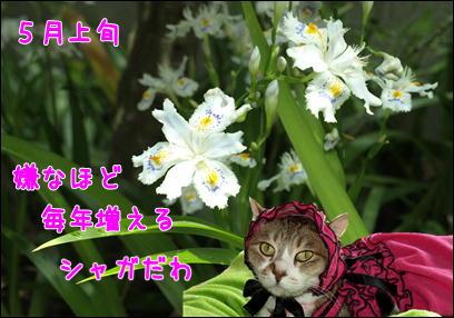 d0139352_095967.jpg