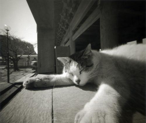 浄妙寺の猫 鎌倉 モノクロピンホール写真 Pinhole Photography_f0117059_1944871.jpg