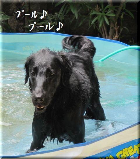 2009 お庭遊び禁止ーー!_c0134862_17125240.jpg