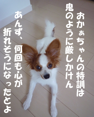 b0170863_22534117.jpg