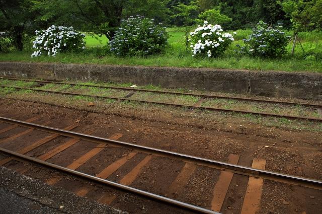 紫陽花の咲く駅 4_f0018464_14122393.jpg