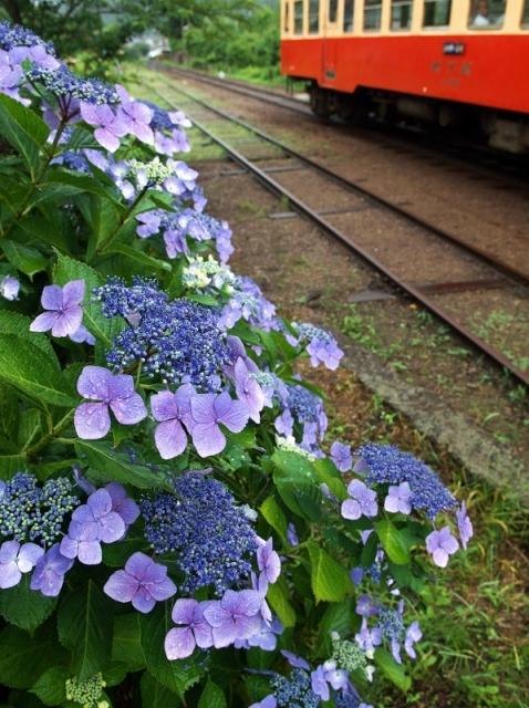 紫陽花の咲く駅 4_f0018464_1435099.jpg