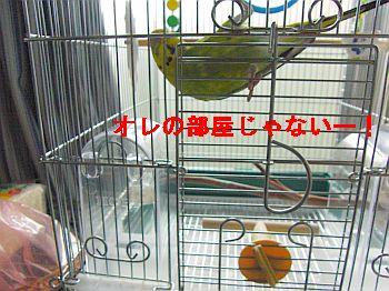 f0196665_0101963.jpg