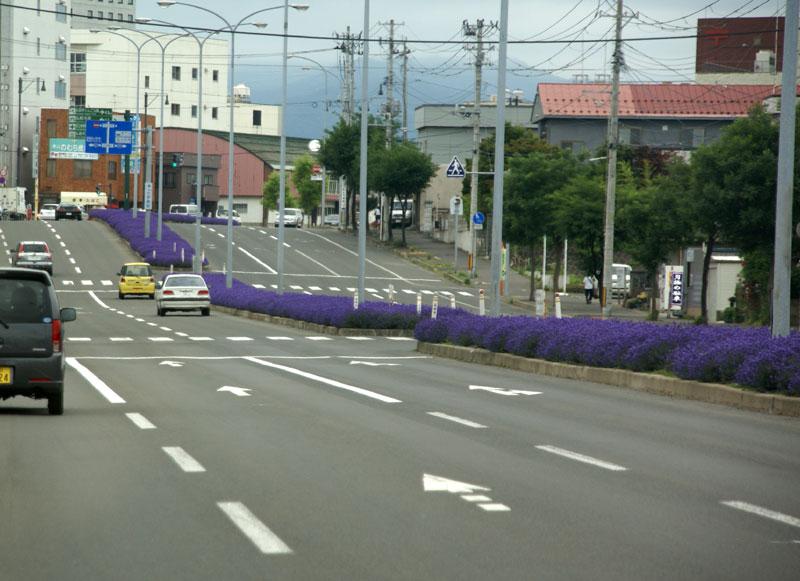 ラベンダー通り(弘前市)_a0136293_15135544.jpg