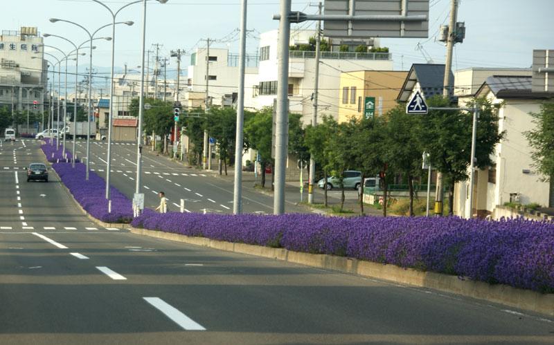 ラベンダー通り(弘前市)_a0136293_15152188.jpg