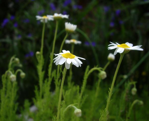 庭の花たち_a0136293_1714512.jpg