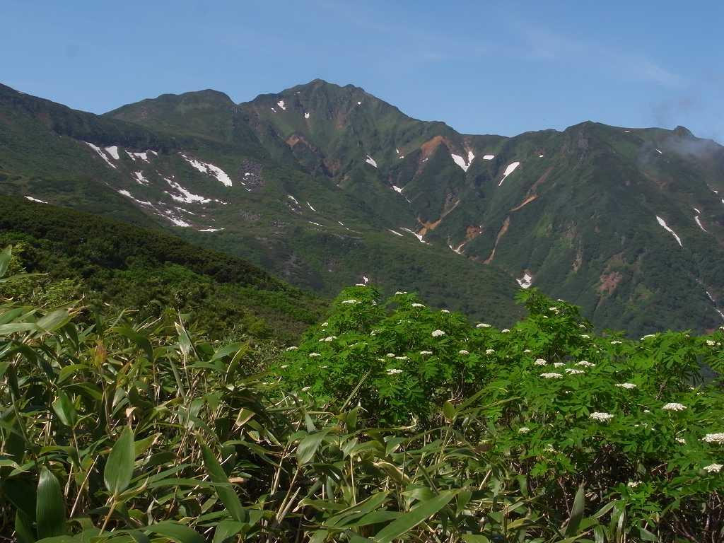 7月6日、花の100名山富良野岳_f0138096_20123631.jpg