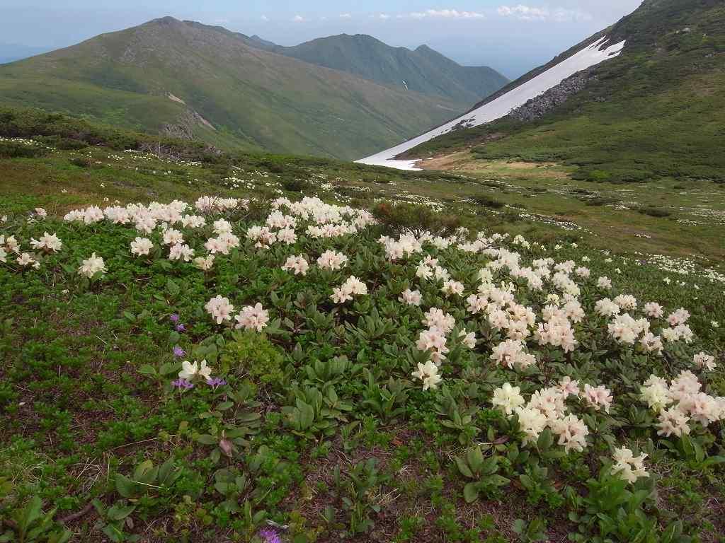 7月6日、花の100名山富良野岳_f0138096_2014348.jpg