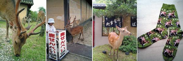 奈良に行ってきました〜。_f0083904_17243376.jpg