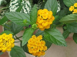 お花のパワー_c0098807_235625.jpg