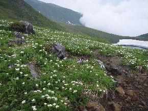 鳥海山_f0105112_10202644.jpg