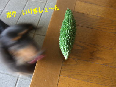 c0058727_1659873.jpg