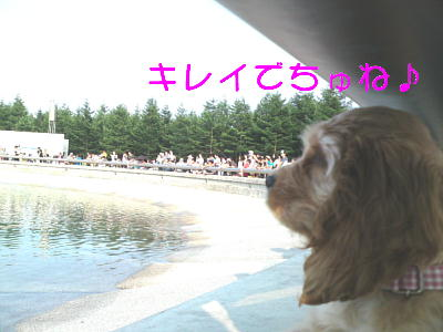b0176428_1502117.jpg
