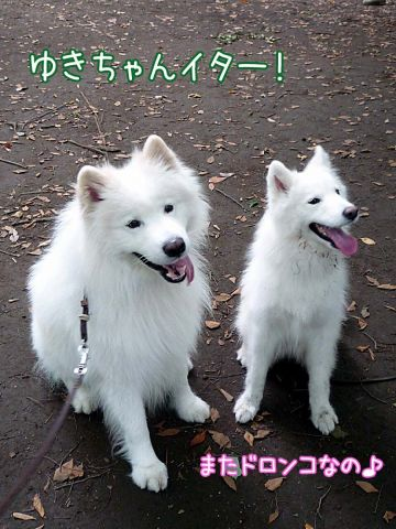 ともだちイパーイ♪_c0062832_174732.jpg