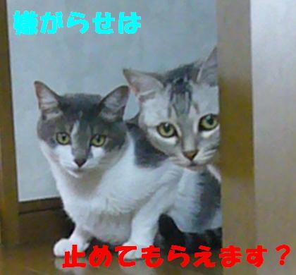 新入り_f0002743_14541318.jpg