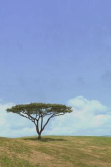 AFRIKA_6