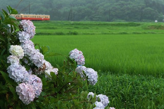 紫陽花の咲く駅 5_f0018464_15132294.jpg