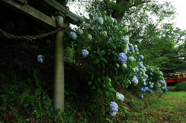 紫陽花の咲く駅 5_f0018464_15133578.jpg