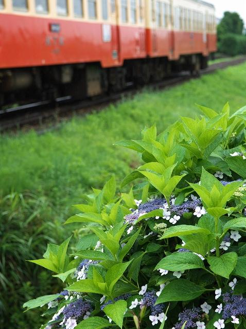 紫陽花の咲く駅 5_f0018464_15322768.jpg