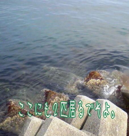 c0169168_7585147.jpg
