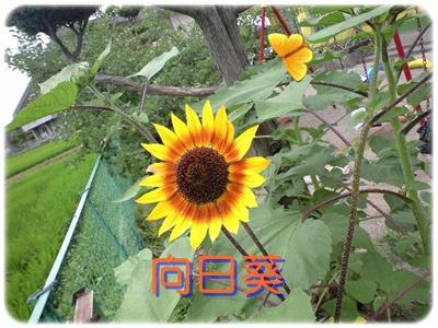 b0149071_17225450.jpg