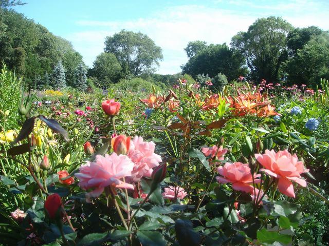Bee Balmの花を求めて、_d0100880_21173414.jpg