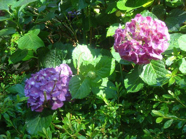 Bee Balmの花を求めて、_d0100880_21182553.jpg