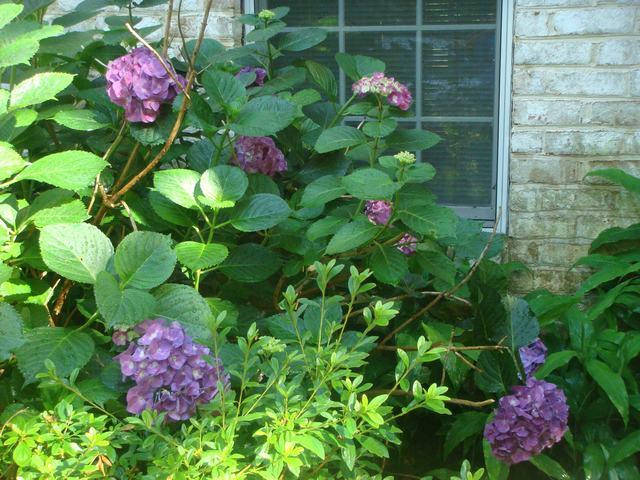 Bee Balmの花を求めて、_d0100880_21184348.jpg