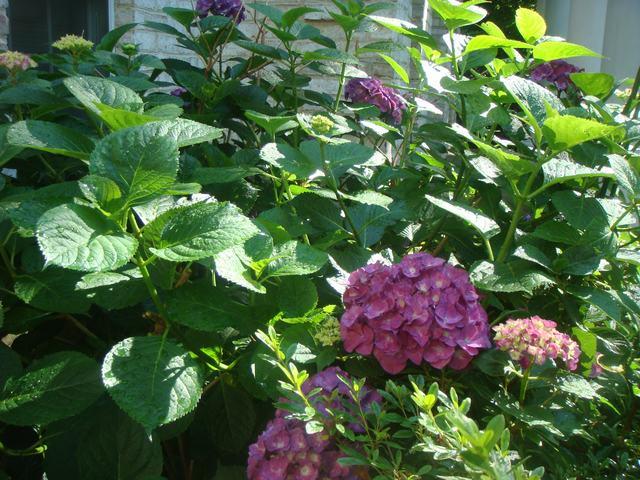 Bee Balmの花を求めて、_d0100880_2119180.jpg