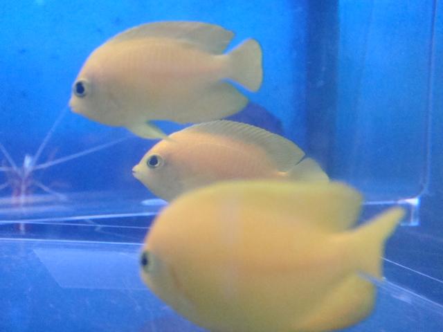 海水魚・サンゴ・水草・日本産淡水魚_f0189122_131489.jpg