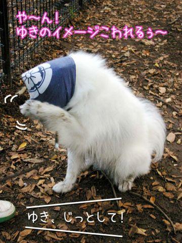 田吾作への道_c0062832_21255238.jpg