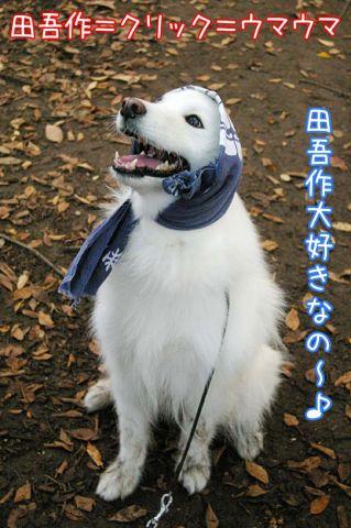 田吾作への道_c0062832_2126394.jpg