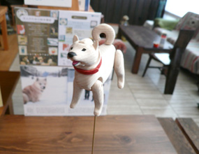 杉田修一「北海道犬」新作ペット君登場_a0017350_192961.jpg