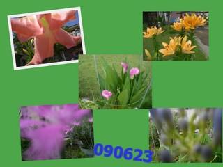b0173550_1121566.jpg