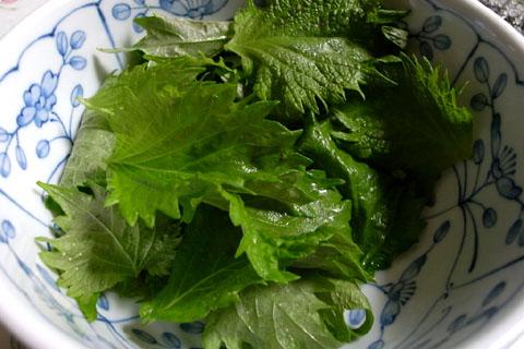 家庭菜園0708:番外編_a0083760_21483661.jpg