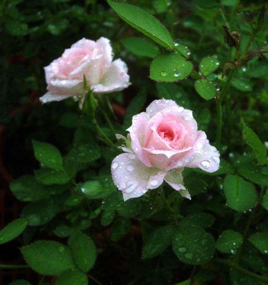 梅雨の朝_a0136293_2034253.jpg