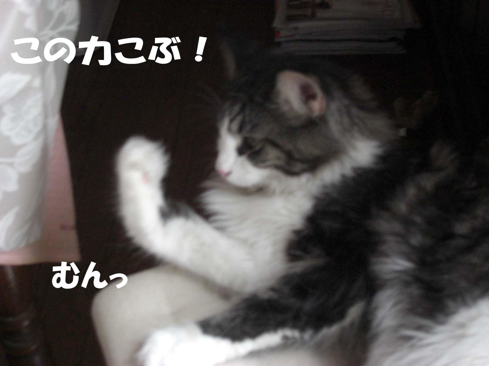 f0180799_1181948.jpg