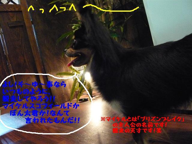 b0130018_1132593.jpg