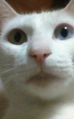 今日の外猫さん_b0105719_1113326.jpg