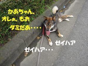 f0143123_20121839.jpg