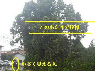 f0031037_2044288.jpg
