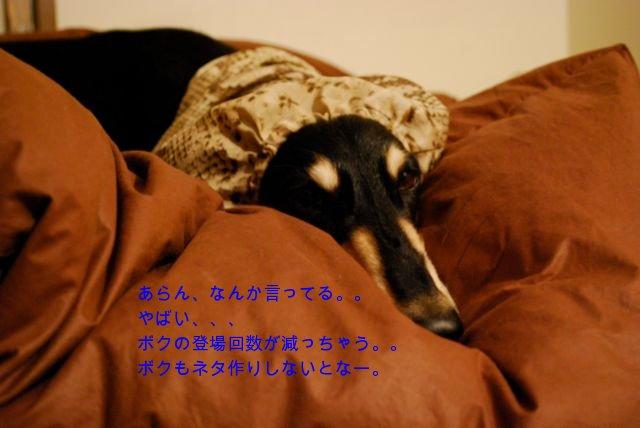 f0039538_2251129.jpg