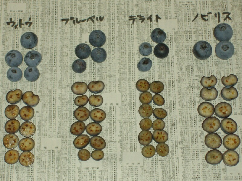 ラビットアイ系の果肉の色と種、デライト、ウィトゥ、ノビリス、ブルーベル_f0018078_19522194.jpg