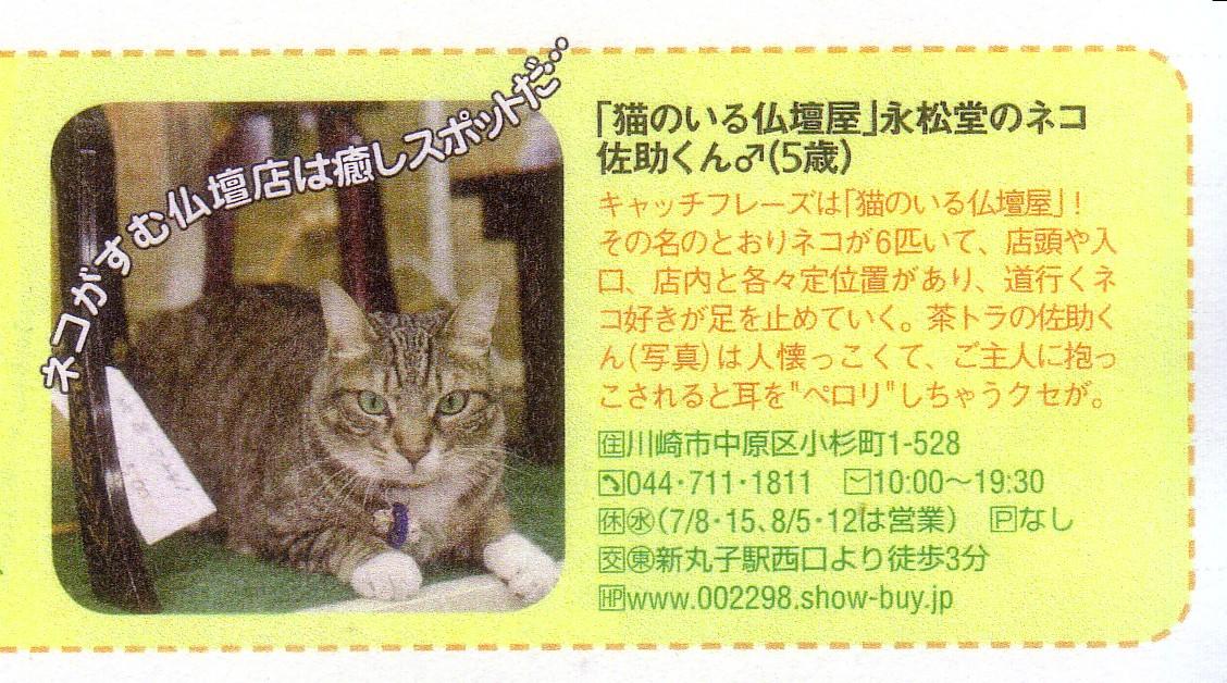 只今発売中[Yokohama Walker]に佐助君が掲載されてます。_b0151490_13392731.jpg