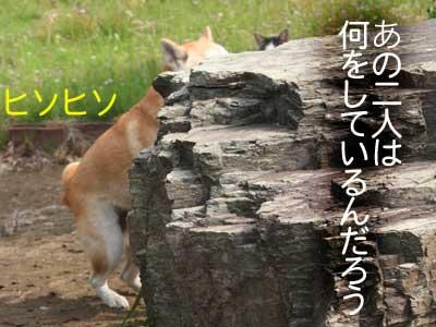 c0166018_12322044.jpg